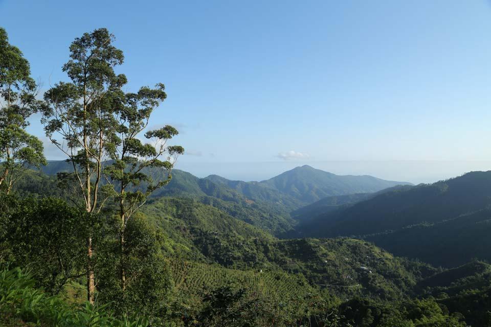 The Blue Mountains Jamaica